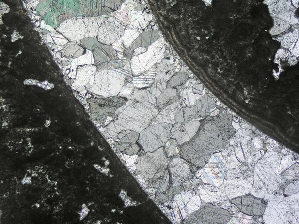 Sección de una concha de almeja fosilizada de agua dulce cubierta, externa e internamente, por un crecimiento microbialítico. Yacimiento de los acantilados de Abeu en Ribadesella (Asturias).