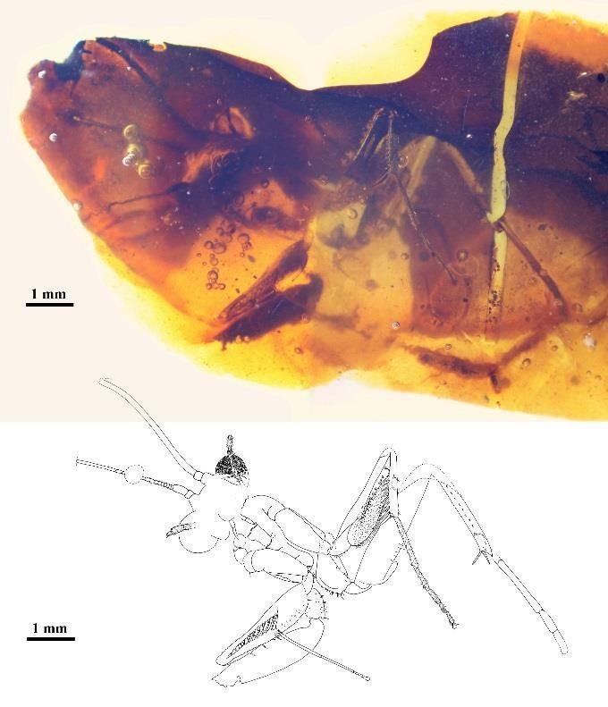 Aspecto general de la mantis