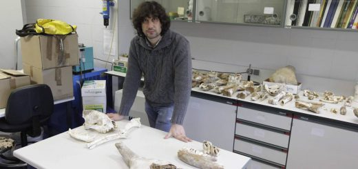 Diego XXX. Restos de animales (prob. Cuaternario) encontrados en un yacimiento de Ribadesella. © Jorge Peteiro. Oviedo, 08/11/2012.